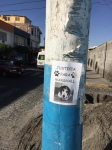 Serious canine cops in Arequipa