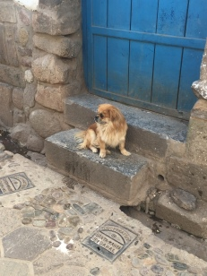 A furry friend in San Blas